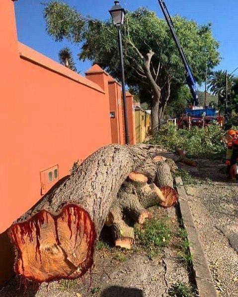 Exigimos la paralizaciíón de la tala de árboles en La Laguna