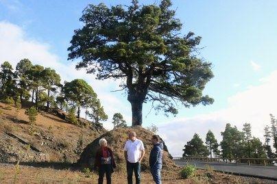 Un monumento en el Pino del Consuelo recordará a las víctimas palmeras de la represión franquista