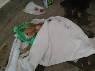 Matanza de felinos en La Marina de Mogán
