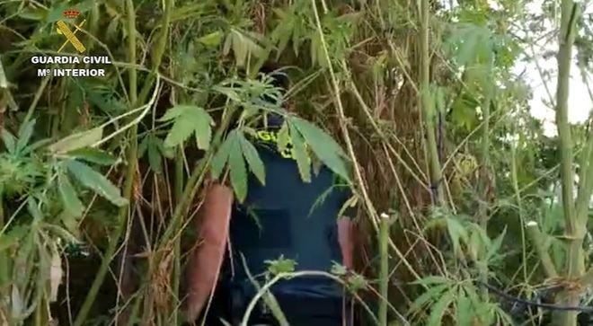 La Guardia Civil intercepta más de una tonelada de marihuana en Valdemoro