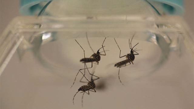 Detectado el primer caso de Zika por transmisión sexual