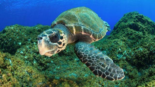 La Palma mostrará su biodiversidad en una feria de buceo