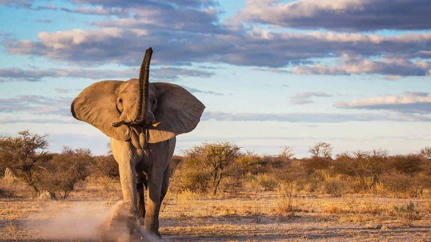 Los científicos prevén la extinción de casi todas las especies a finales de siglo