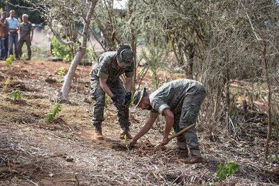 El Cabildo y el Ejército reforestan 60 ha del Parque Rural de Doramas