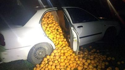 La Guardia Civil recupera nueve toneladas de naranjas robadas en Sevilla