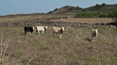Fuerteventura refuerza y agiliza las ayudas al agua agrícola y ganadera para impulsar el sector primario