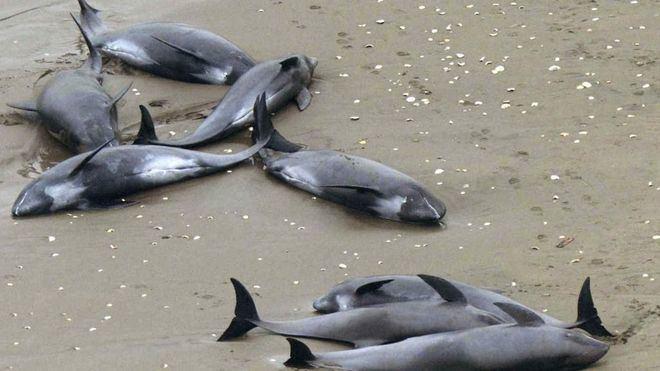 Imagen de archivo de delfines afectados en el Atlántico
