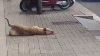 Colau pide testigos y pruebas documentales de la muerte Sota, la perra disparada por un urbano