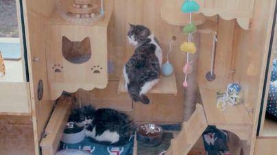 Creado el primer refugio con inteligencia artificial para gatos callejeros