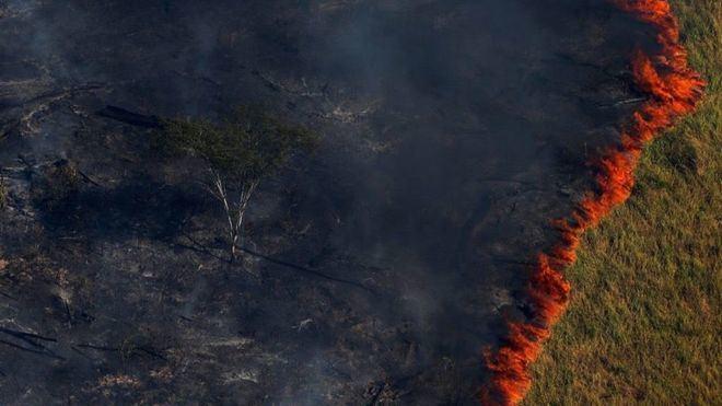 Desastre medioambiental en Brasil: Los incendios aumentan un 83 por ciento