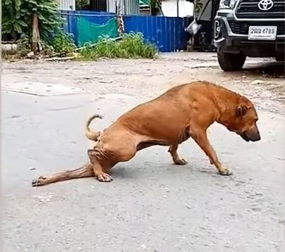 Una perra finge tener una pata rota para que la gente le dé comida