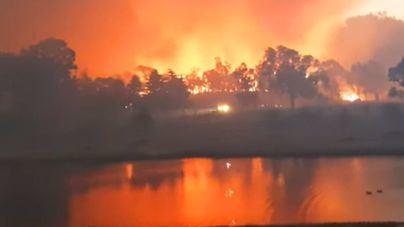 Alarma en Australia ante el avance de los incendios forestales