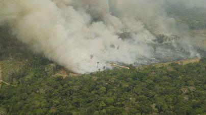 Científicos culpan a la deforestación de los incendios en el Amazonas