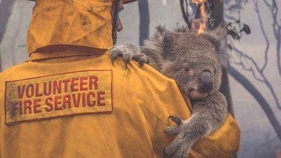 Los incendios en Australia amenazan el futuro de 327 especies