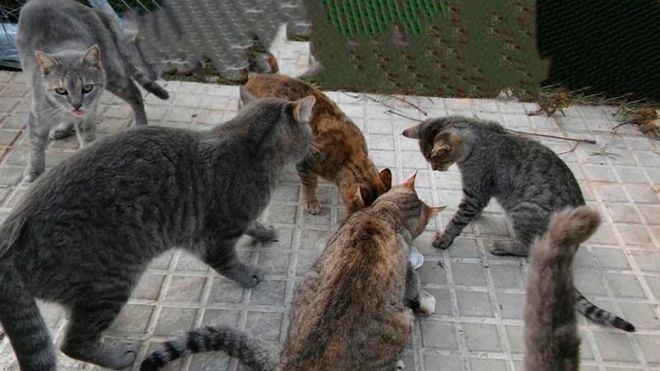 Sanidad afirma que las personas pueden transmitir el coronavirus a los gatos, pero no al revés