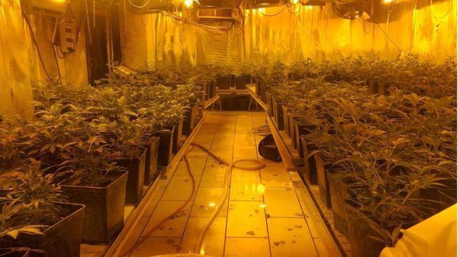 La mitad de los españoles está a favor de legalizar la marihuana