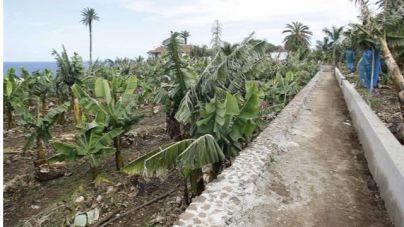 Clavijo abordará la modificación de la PAC con los ministros de Agricultura de Francia, España y Portugal
