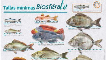 El Cabildo repartirá 500 carteles con las tallas mínimas de los pescados