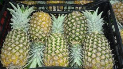 Fruta ilegal incautada