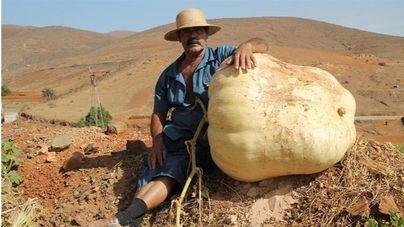 Crece en Agua de Bueyes una calabaza gigante de 117,5 kilos