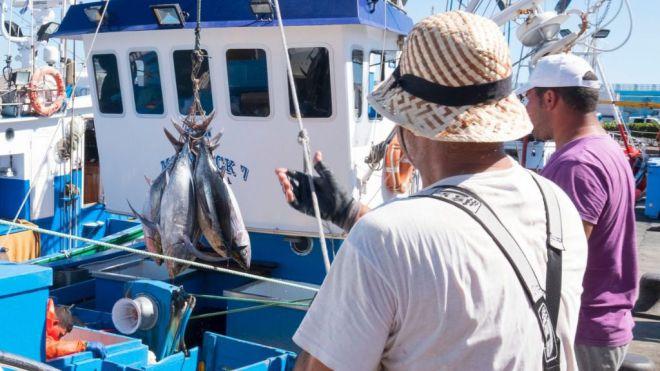 Los pescadores canarios podrán capturar atún blanco a partir de este jueves