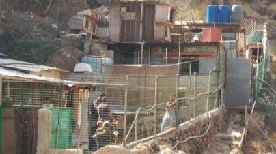 El Consistorio abre 16 actas en asentamientos que albergan animales en los barrancos