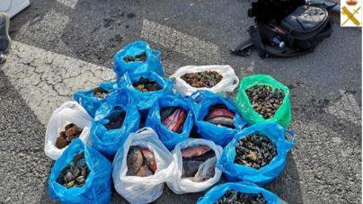 Interceptan 63 kilos de pescado capturados en su mayoría de forma ilegal