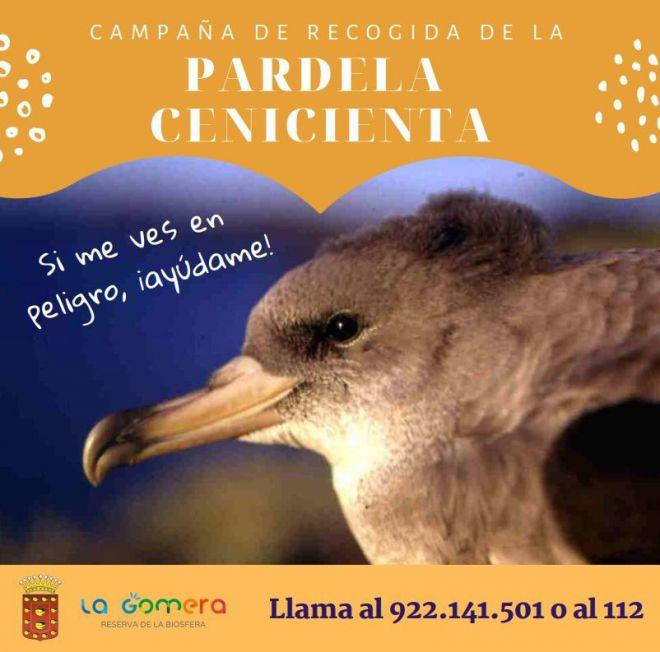 La Gomera activa la campaña de recogida de la pardela cenicienta