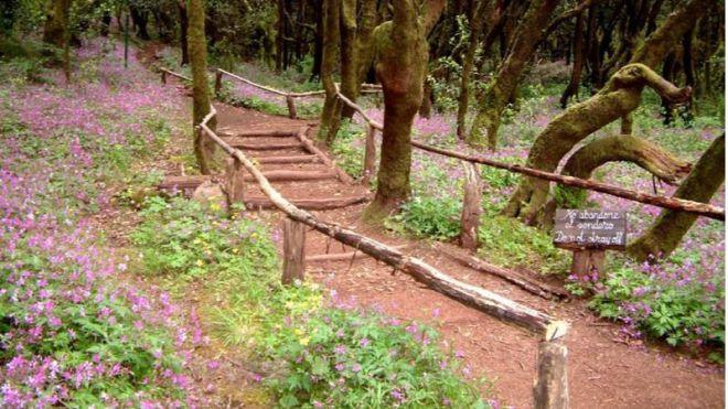 La Gomera destina 850 mil euros a la conservación y mejora de su red de senderos