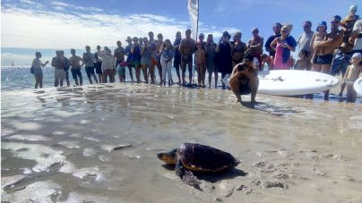 Devuelta al mar en Butihondo una tortuga recogida en Morro Jable