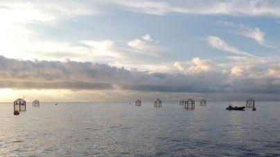 Nature publica una investigación sobre los efectos de la acidificación del océano en el desarrollo de algas tóxicas