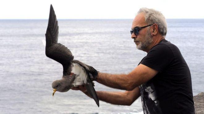 Finaliza la campaña de atención a la pardela cenicienta con un total de 397 aves recuperadas