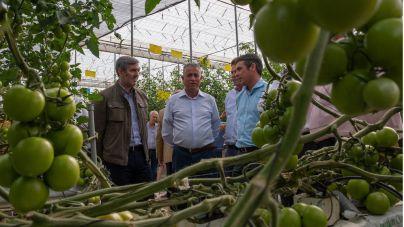 Clavijo destaca el pago del POSEI adicional y la puesta en marcha de la estrategia del tomate