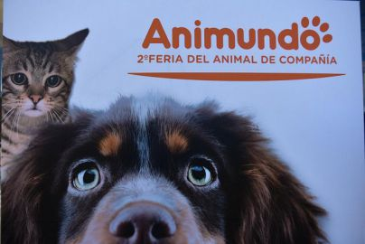 Animundo abre su segunda edición con 12 perros adoptados