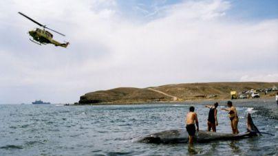 La ULPGC lidera una referencia mundial para la conservación de cetáceos