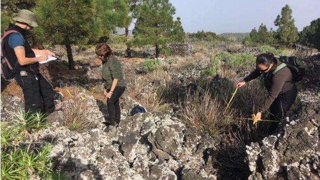 Medio Ambiente retiró el pasado año unas 88 toneladas de flora exótica