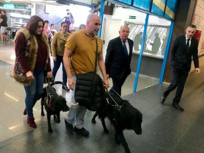 Global habilitan asientos para personas con discapacidad visual con perros guía