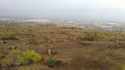 Telde y el Cabildo reforestan el antiguo vertedero de Lomo Calasio