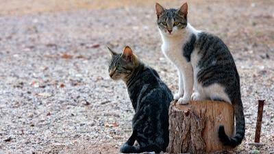 Esterilizaciones a 2.000 animales para frenar el abandono en Gran Canaria