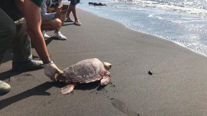 Más de setenta escolares participa en la suelta de una tortuga boba