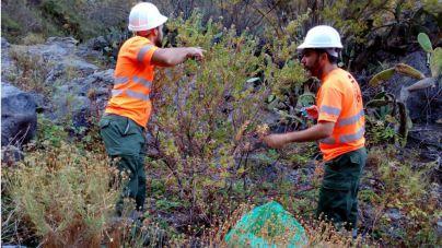El Cabildo retira 40 toneladas de flora exótica invasora durante el mes de junio