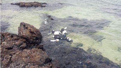 El Ayuntamiento de Haría retira el cadáver de una vaca de la costa de Órzola