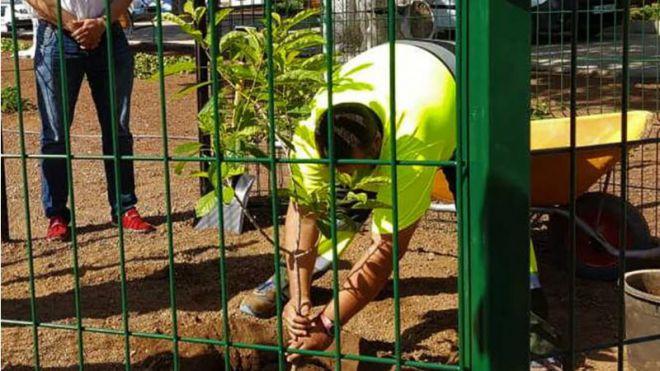 Tamaide recibe el legado botánico del Hermano Pedro