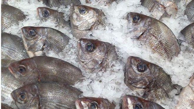 Detectan 270 kilos de pescado comercializados irregularmente en Fuerteventura
