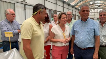 La consejera de Agricultura del Gobierno se reúne con el sector tomatero en La Aldea