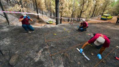 El Cabildo de Gran Canaria investiga el 100 % de los incendios forestales de la isla