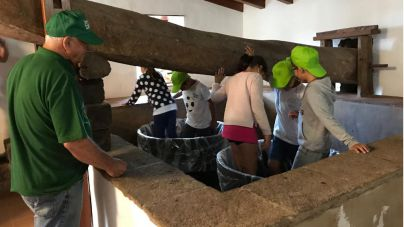 Escolares de Tegueste participan en la recolección de la uva a través de 'Una vendimia para la Esperanza'