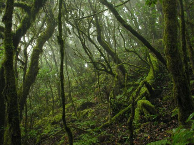 Transición Ecológica destina más de un millón de euros a la conservación del Parque Nacional de Garajonay