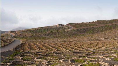 La viticultura y el vino en las aulas de CIFP Zonzamas
