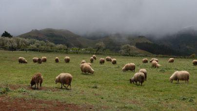 El Cabildo entrega más de 380.000 kilos de forraje a los ganaderos afectados por los incendios